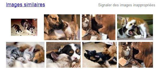 recherche-image-google-images-similaires