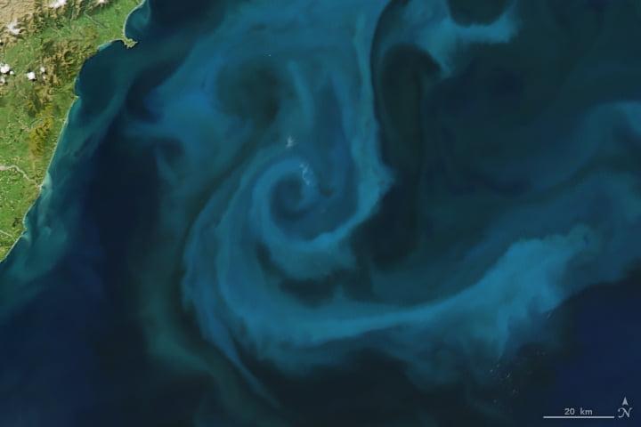 Phytoplancton (Nouvelle-Zélande)