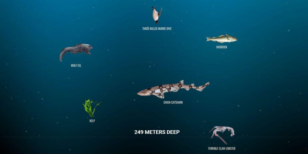 the deep sea fonds marins