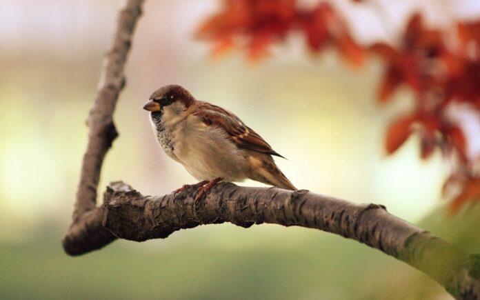 oiseau identification