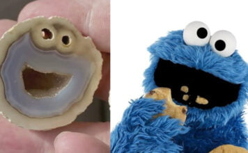 cookie monster pierre ressemblance