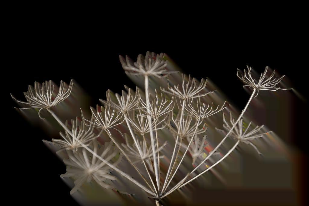 apowersoft fleurs seche