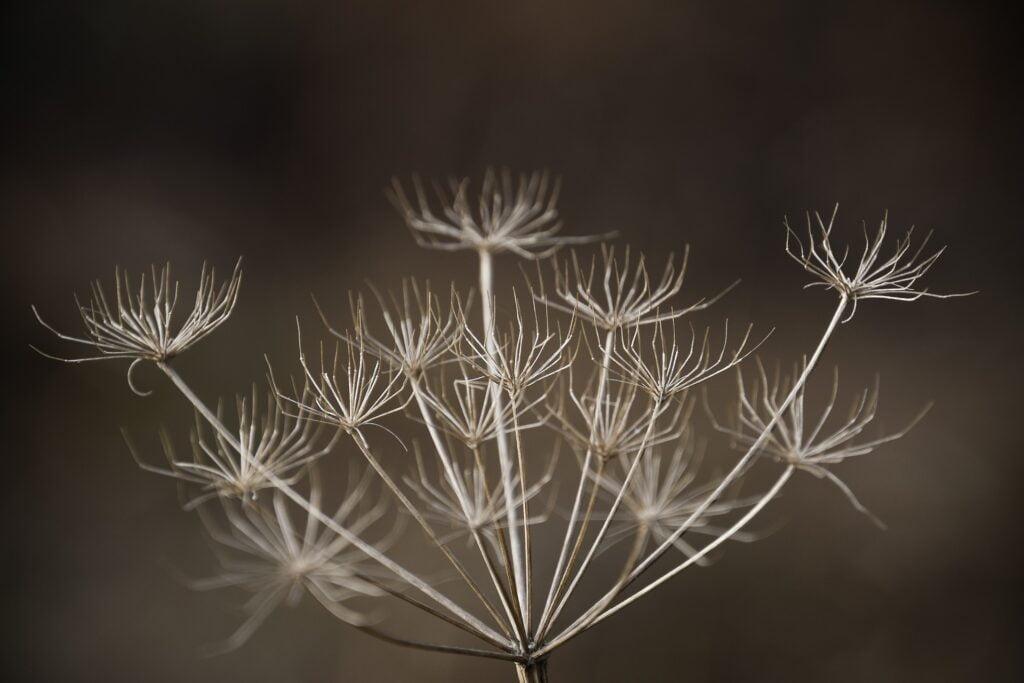 fleurs seches